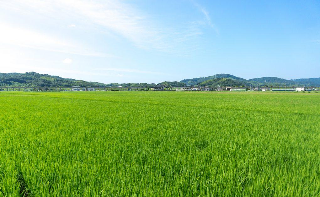 岡山県倉敷市真備町の田園風景